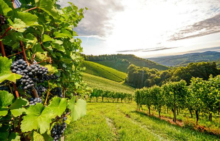 Gourmetreise Slowenien